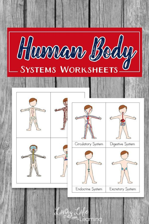 Human body systems worksheets for kids pinterest human body system worksheets for kids teach them the functions of the different body system in malvernweather Choice Image