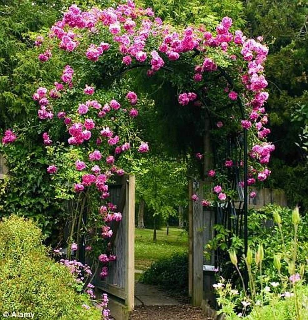 Landscaping And Outdoor Building The Best Climbing Plant For Shade Roses