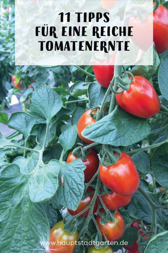 11 Tipps zum Tomaten anpflanzen #tomatenpflanzen