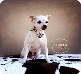 Lubbock, TX Chihuahua Mix. Meet Aim, a dog for adoption