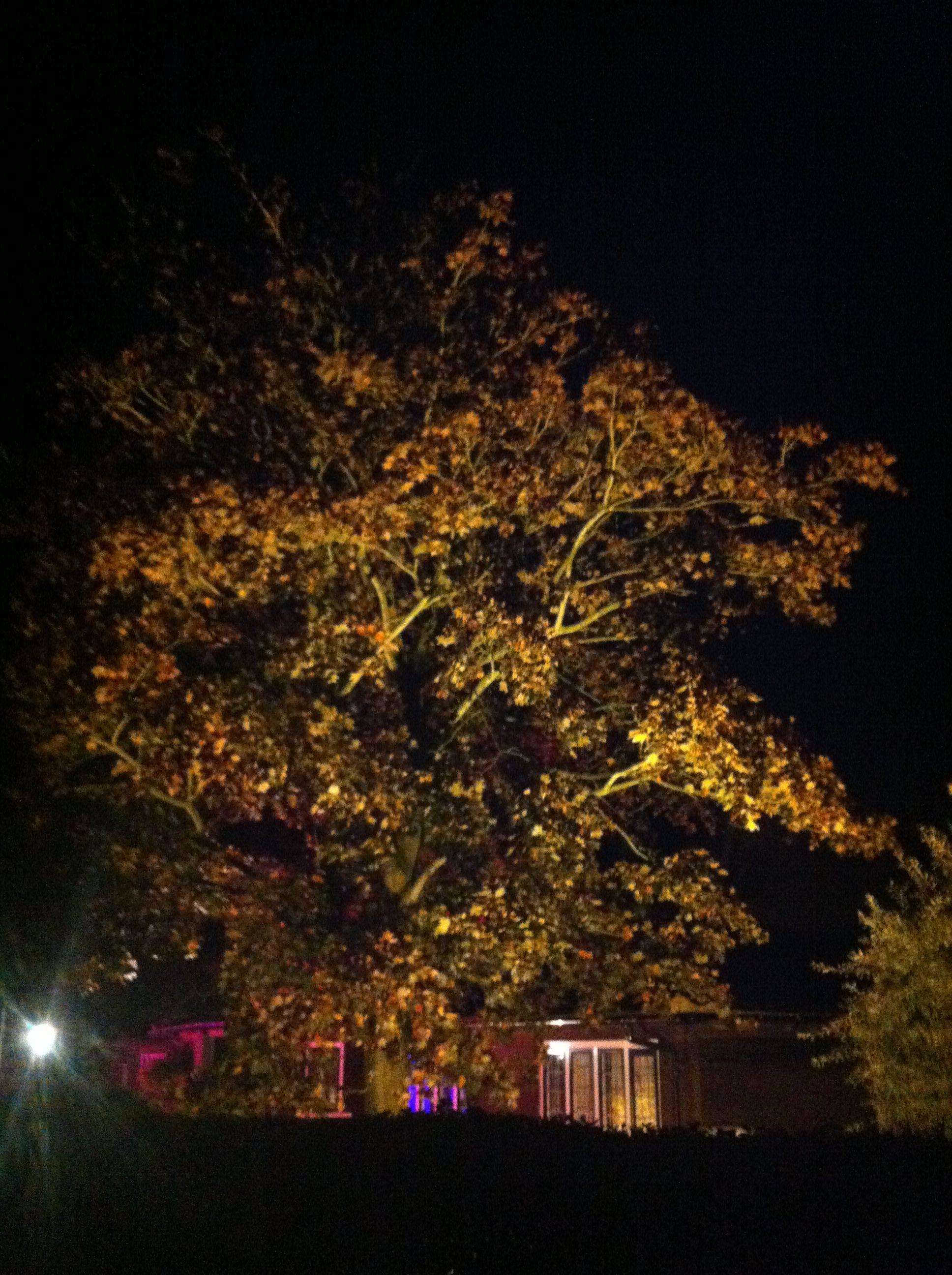 Ballinger Memorial Hall Tree Lighting Uplighting