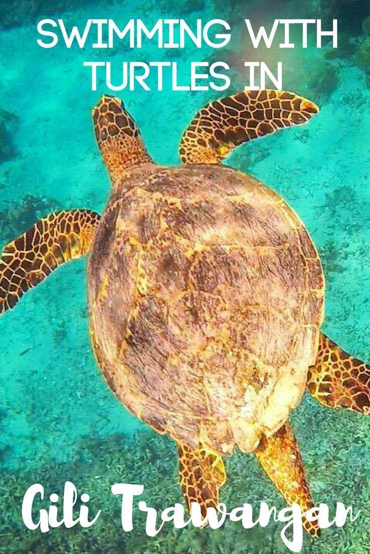 Swimming with turtles is an incredible experience. I had the opportunity to do so in Gili Trawangan, Indonesia. Find out everything you need to know about organising your own snorkelling trip with turtles!