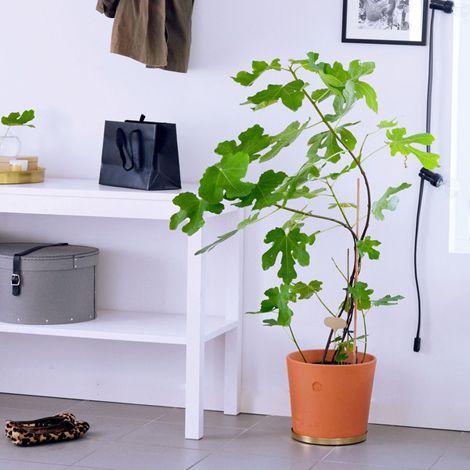 stor växt inomhus