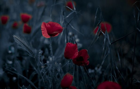 Free poppies htc wallpapersbackgroundthemeappsgames and free poppies htc wallpapersbackgroundthemeappsgames and voltagebd Choice Image