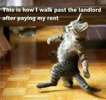 How I Feel When I Pay Rent Funny Cat Memes Funny Animal Pictures Animal Memes