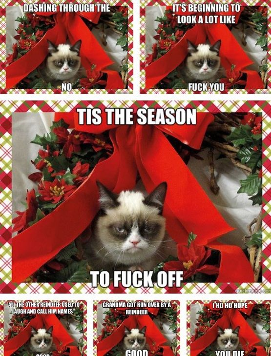 Funny Grumpy Cat Christmas Memes.Grumpy Cat S Christmas Meme Compilation By