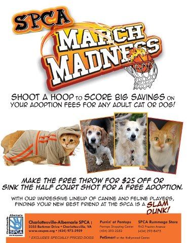 March Madness Adoption Idea Pet Adoption Event Animal Shelter