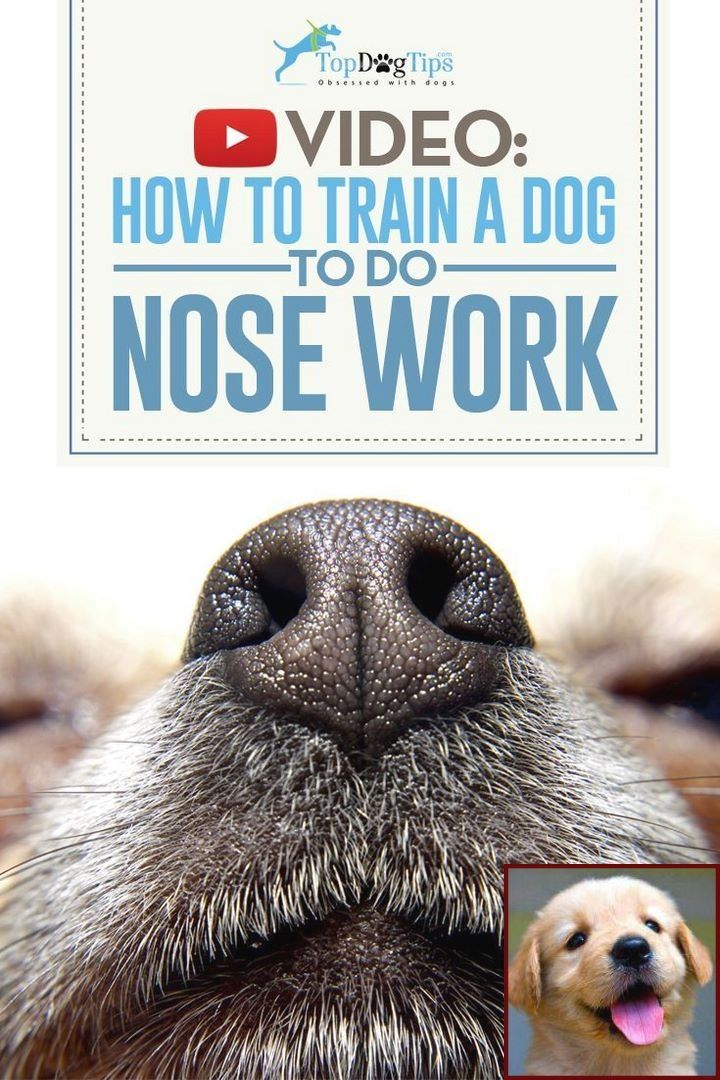 Dog Behavior Near Me and Clicker Training Barking At Other