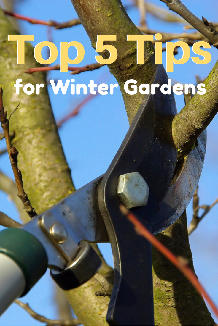 top 5 tips for winter gardens winter garden winter and gardens