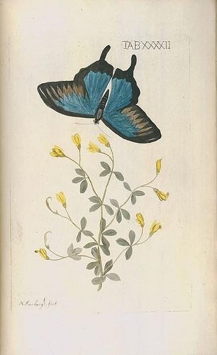 Afbeeldingen van zeldzaame gewassen /door Nicolaas Meerburgh ... By Meerburgh, Nicolaas, 1734?-1814 -- Johannes le Mair. - via Biodiversity Heritage Library