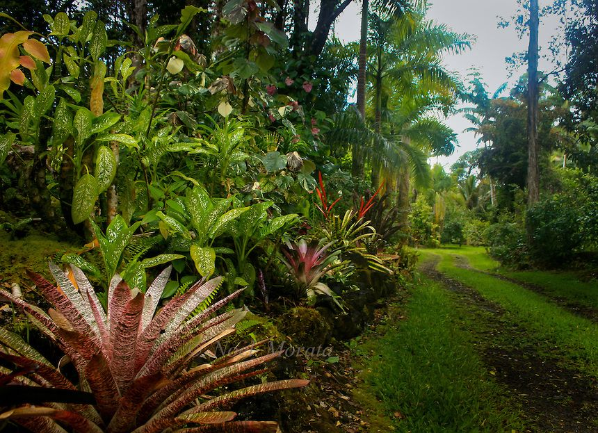 Polynesian plants plants amazing tropical scenery garden vignettes exotic plants tiki for Amazing small gardens