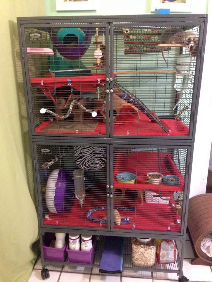 rat cage setup ideas from ratgirl44 on youtube pets at. Black Bedroom Furniture Sets. Home Design Ideas