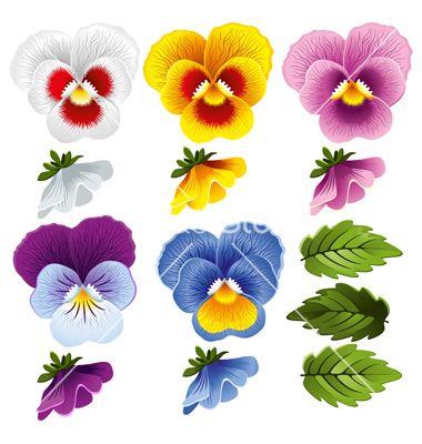 Viola Set Vector Image On Vectorstock Pansies Flowers Pansies Art Flower Painting