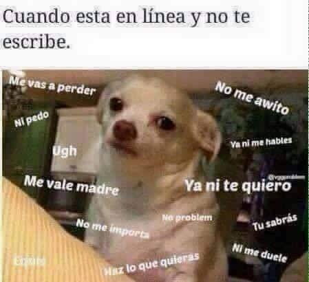 Perro Chihuahua Meme S Mega Memeces Perro Enojado Memes Imagenes De Humor