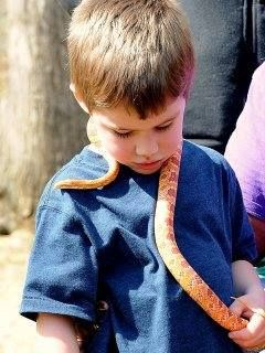 Hoping my love for snakes will rub off on my great nephew. My corn snake Ethel is so docile, she makes the perfect introduction.