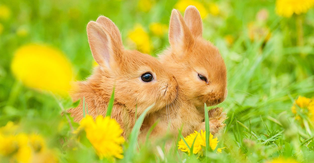 Have You Ever Wondered What Do Baby Rabbits Eat How Do You Know What To Feed Baby Bunnies Anyway You May Think That The Obvious In 2020 Animals Pets Baby Bunnies