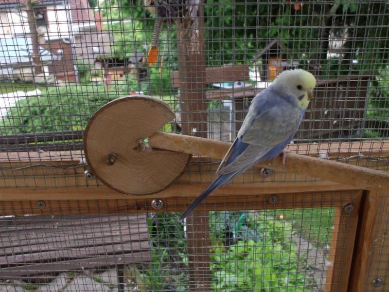 Pin Auf Bird Toys