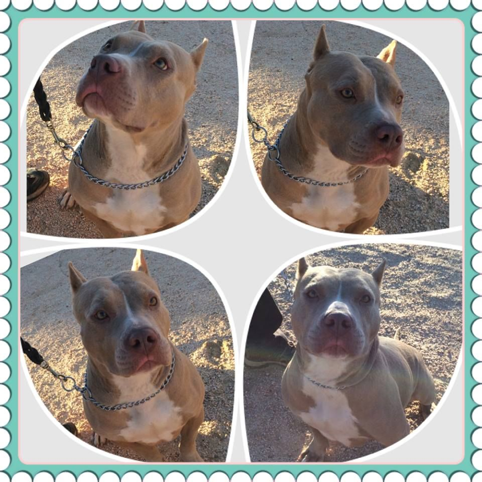 Sweet Sable Needs a Family watch her video, you will