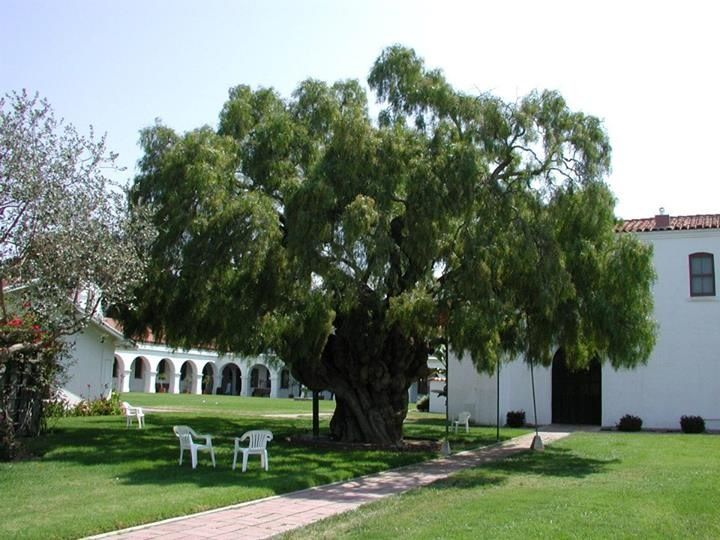 60ce6ecd3c30b7ed7e2aaac28fc8eb95 - Pepper Tree Gardens El Cajon Ca