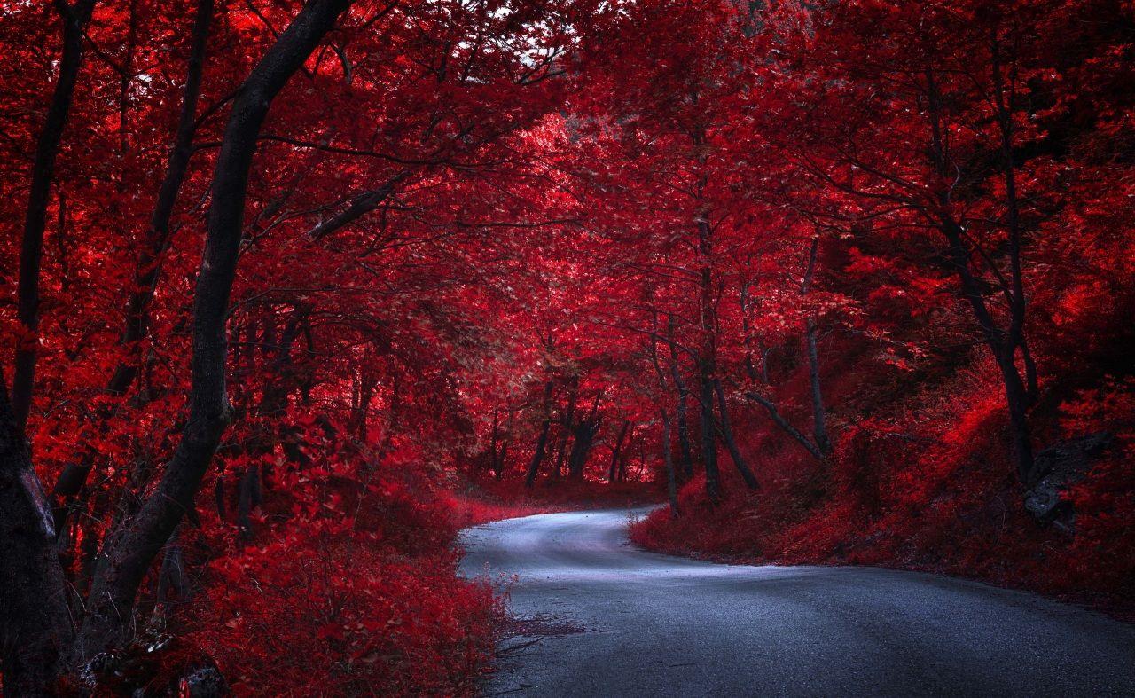 Routes Automne Rouge Arbres Nature Paysage Rouge Paysage Automne Fond Ecran