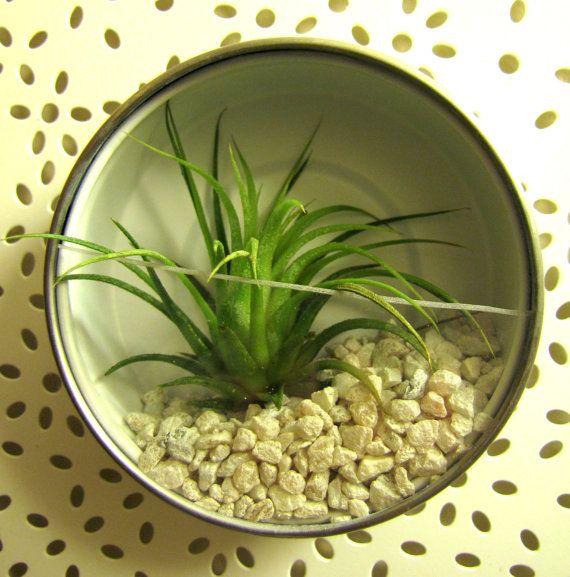 Magnetic Mini Bromeliad Terrarium By Smartbirdie On Etsy 10 00