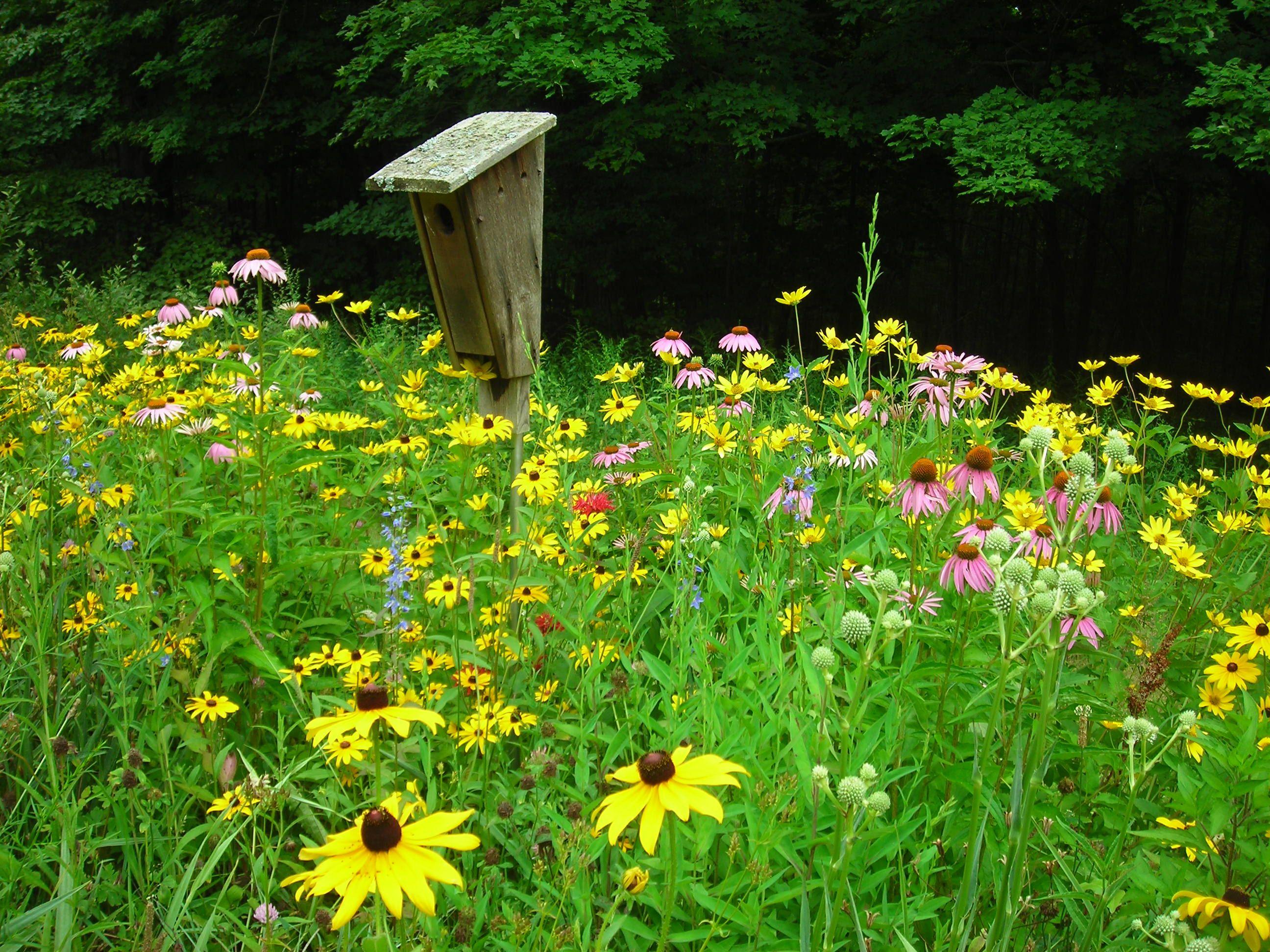 I Want A Meadow Garden Allllllllllllll The Way Around My