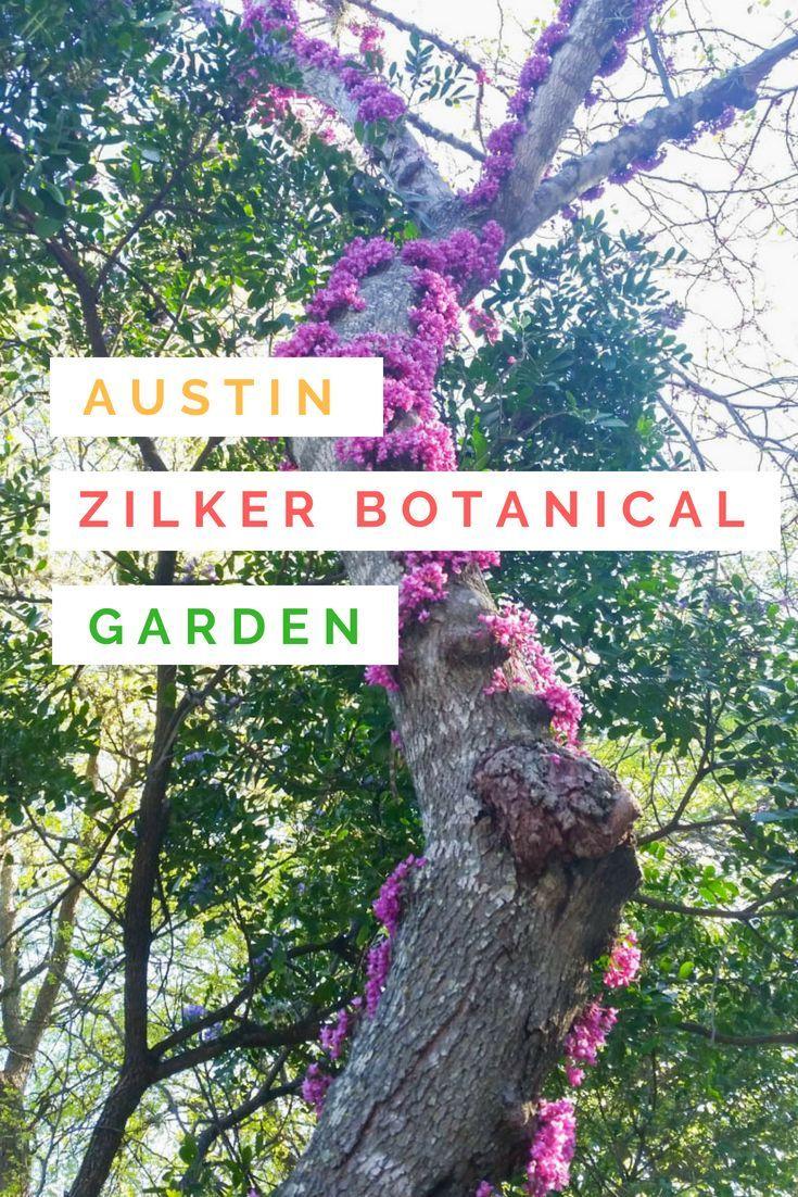 Zilker Botanical Garden in Austin, TX #botanicgarden