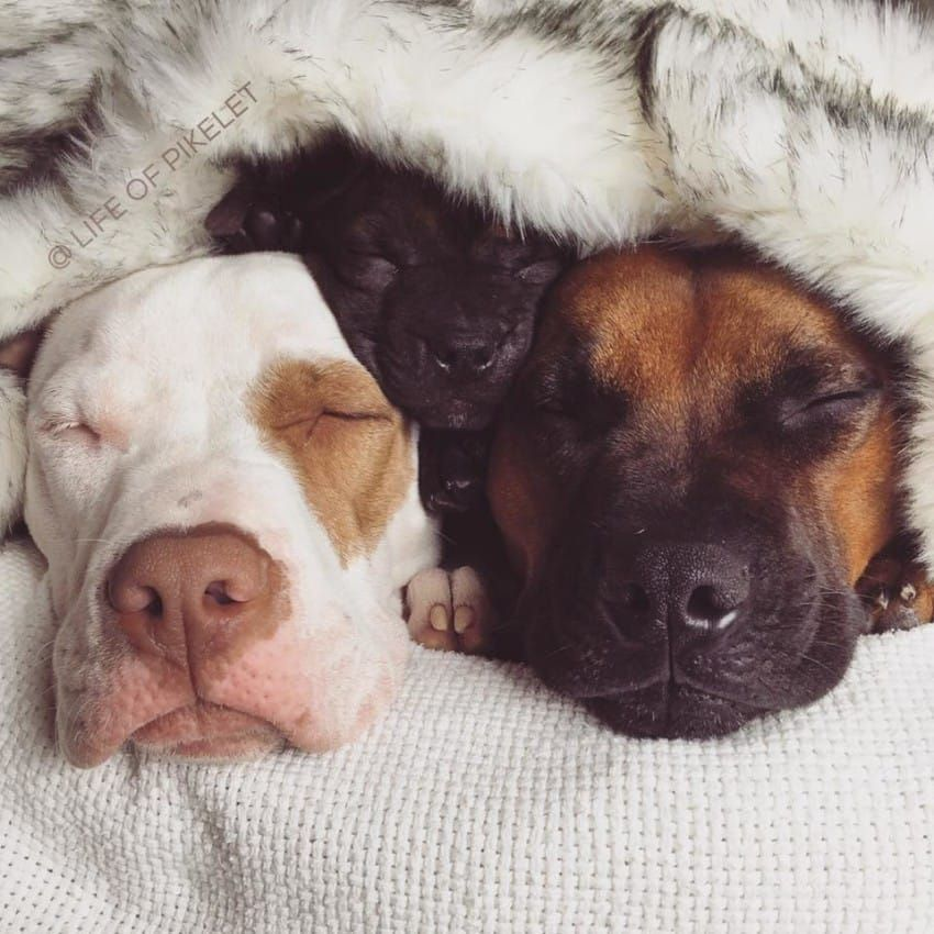 Potato The Puppy Finds Happy Home With Foster Brothers Foster