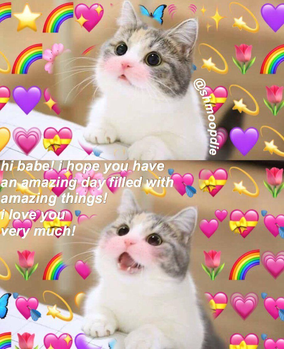 Have A Great Day Cute Memes Cute Cat Memes Cute Love Memes