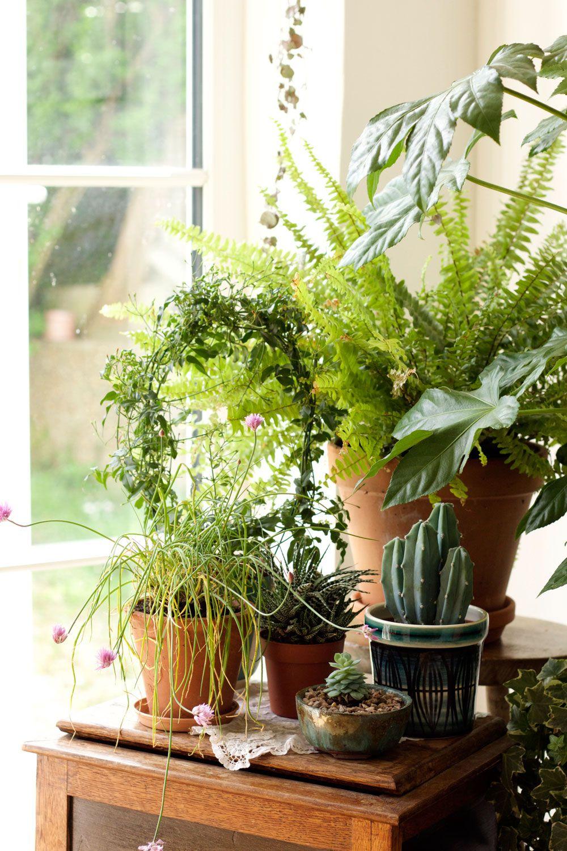 Plant Shelves Wall Decor