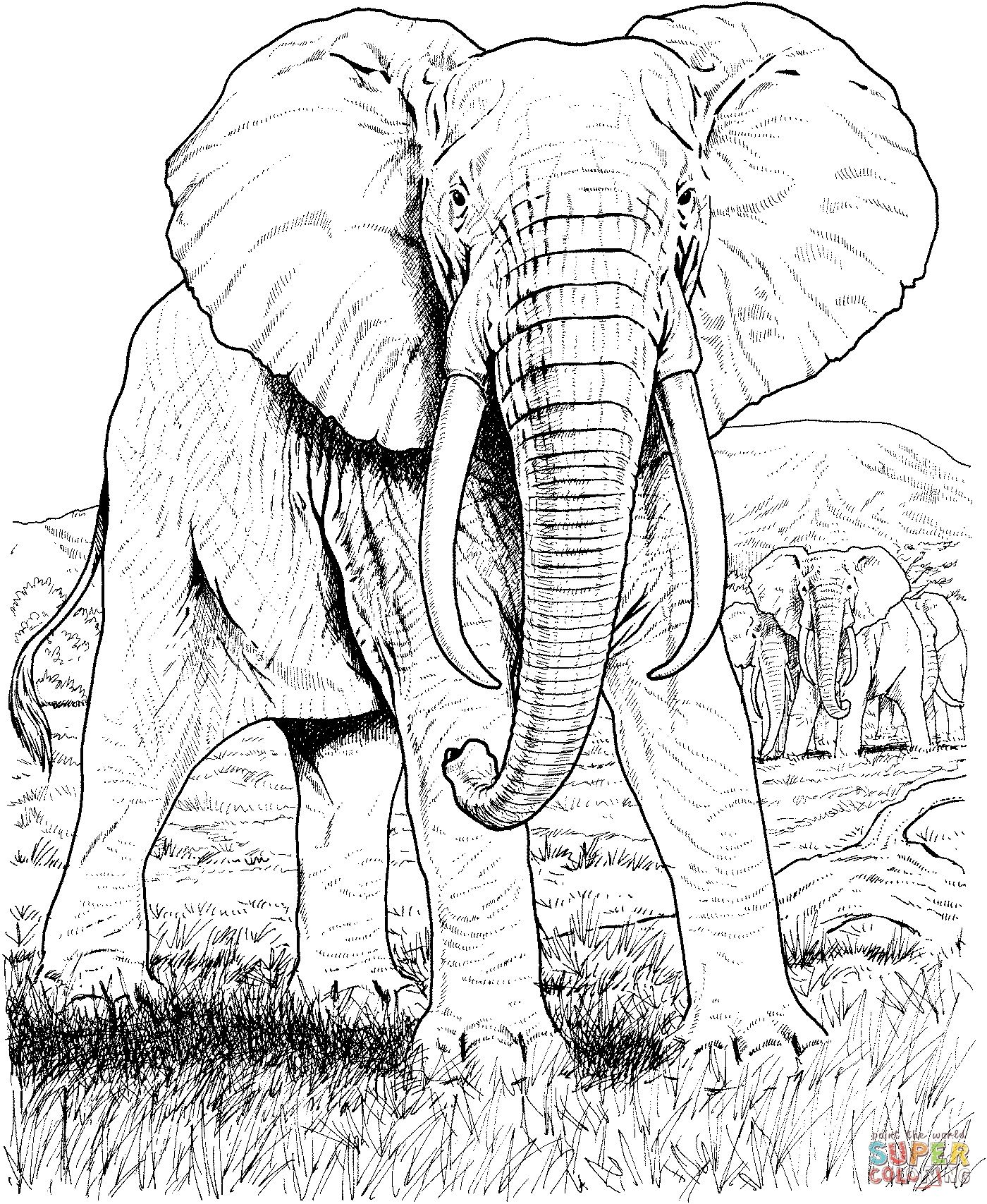 Pin By Pk Van Pommeren On Elephants Elephant Coloring Page Elephant Drawing Animal Coloring Books
