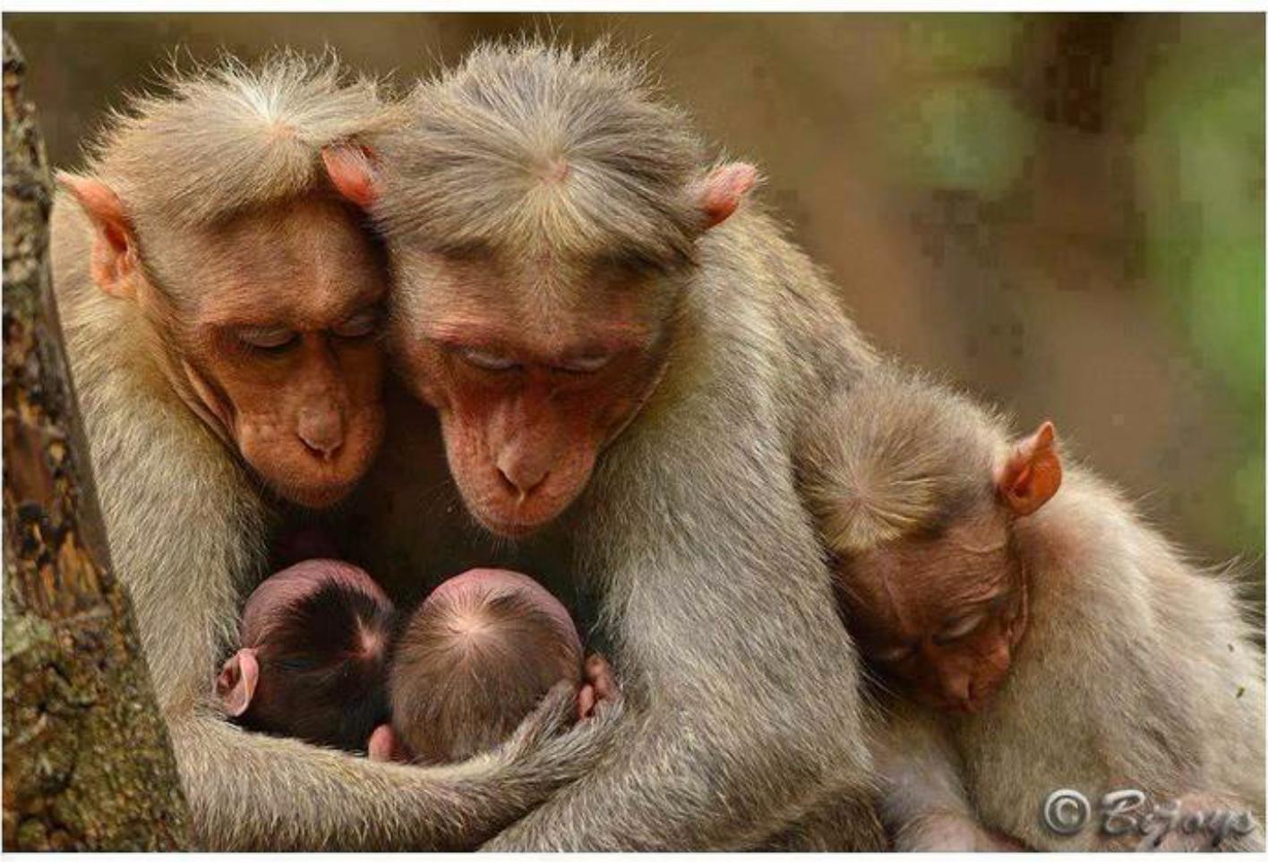 пожалуйста, что смешные картинки животных семей если ищете портрет