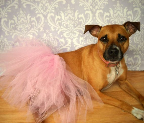 Pin By Alissa On Dogs Dog Tutu Large Dogs Princess Dog