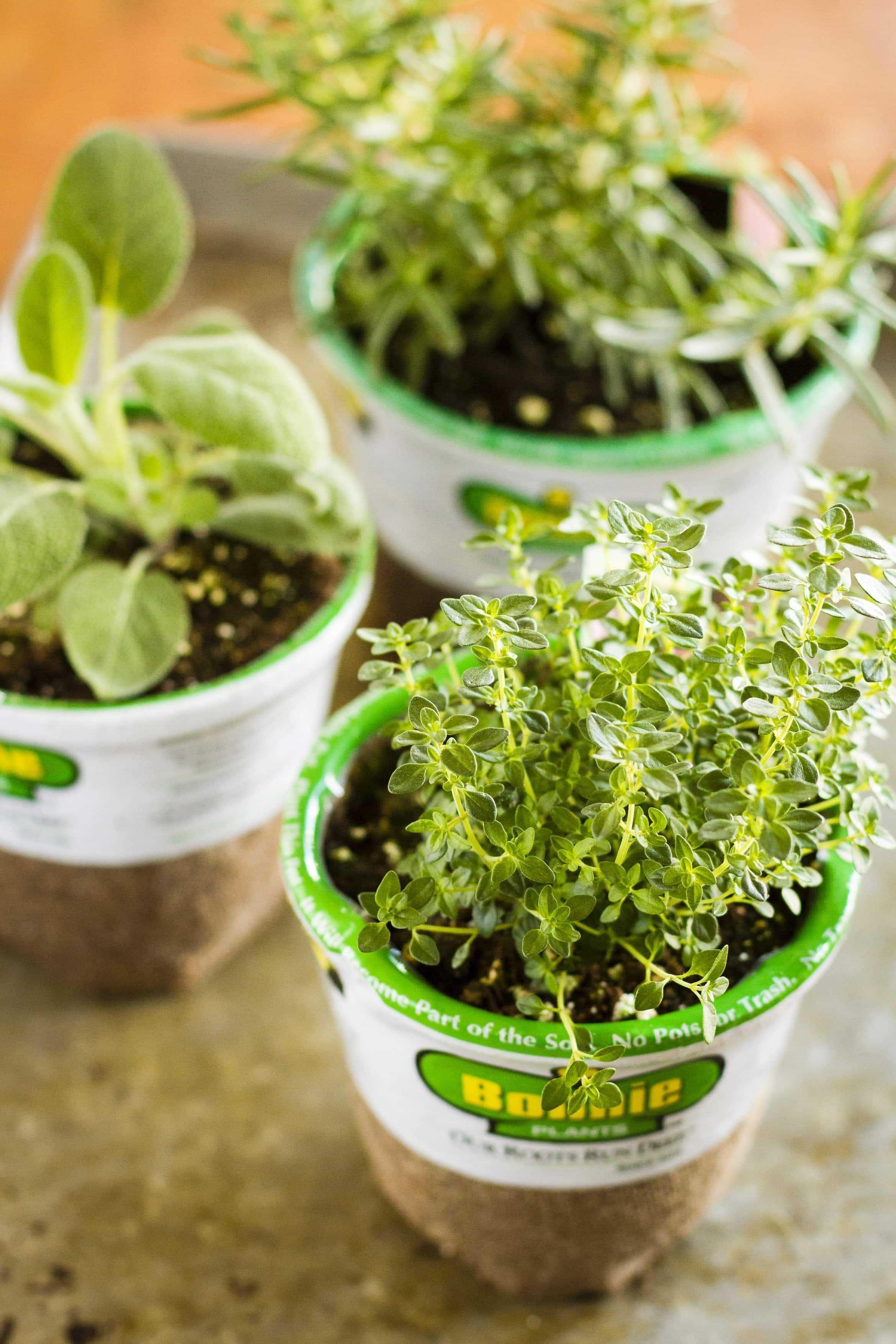 The Indoor Herb Garden Gardening For Beginners Herbs 640 x 480