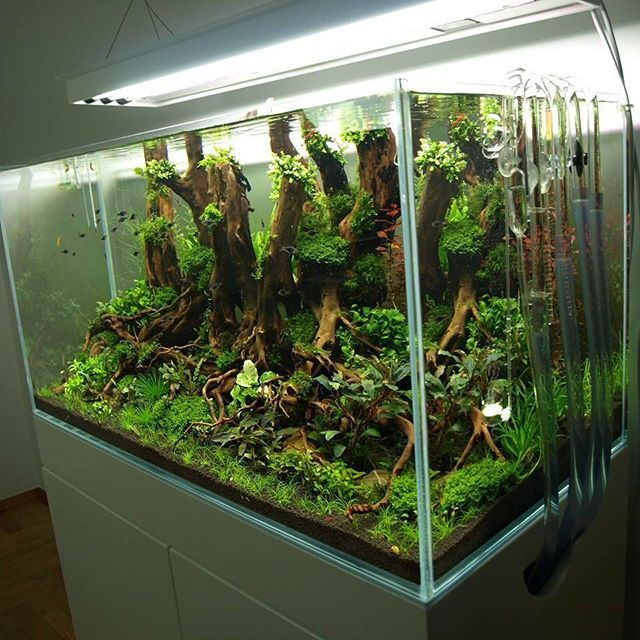 Architectural landscape design aquascaping pinterest fishbowl aquariums and aquaman - Petit aquarium design ...