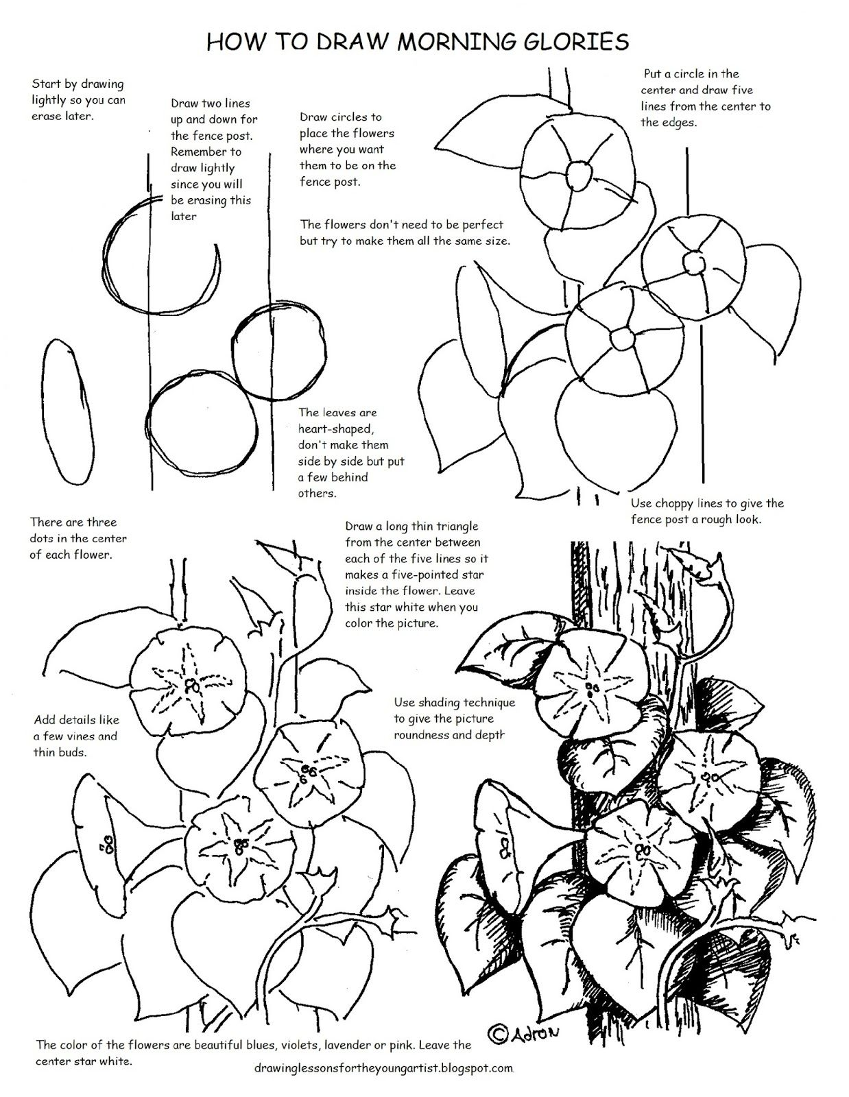 Printable How To Draw Morning Glories Worksheet