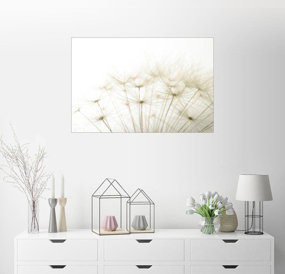 Wandbild Flauschige Pusteblume In 2020 Haus Deko Wandbilder Und Lounge