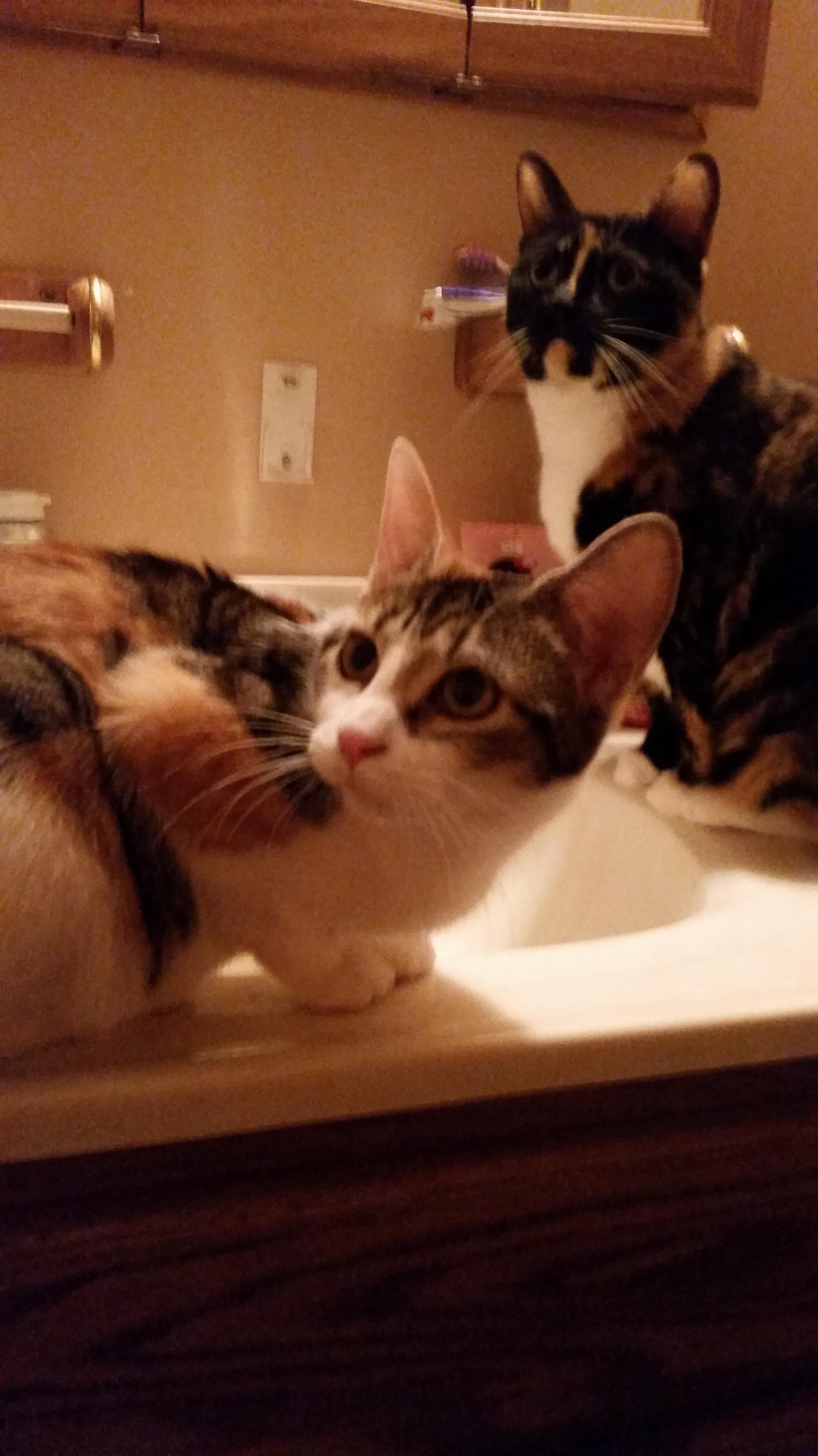 My cats are obsessed with drinking from the faucet and sitting in ...