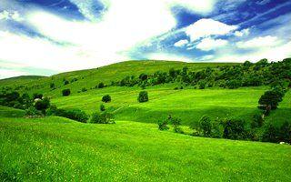 green-hdcopia.jpg~320x480 320×200 pixels
