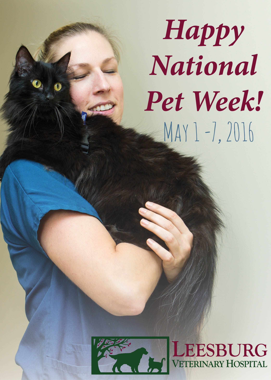 16++ Loving care animal hospital images