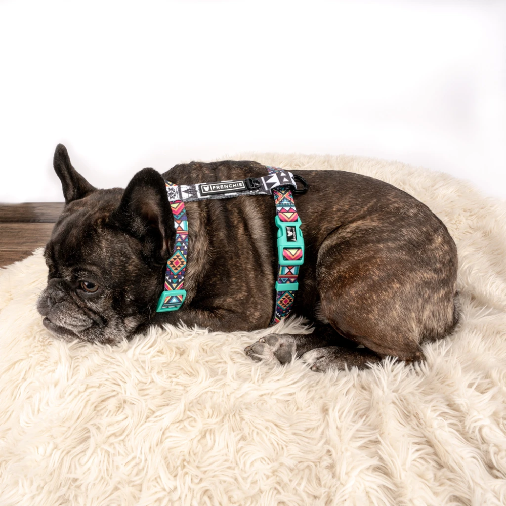 Frenchie Strap Harness Aztec in 2020 (With images)