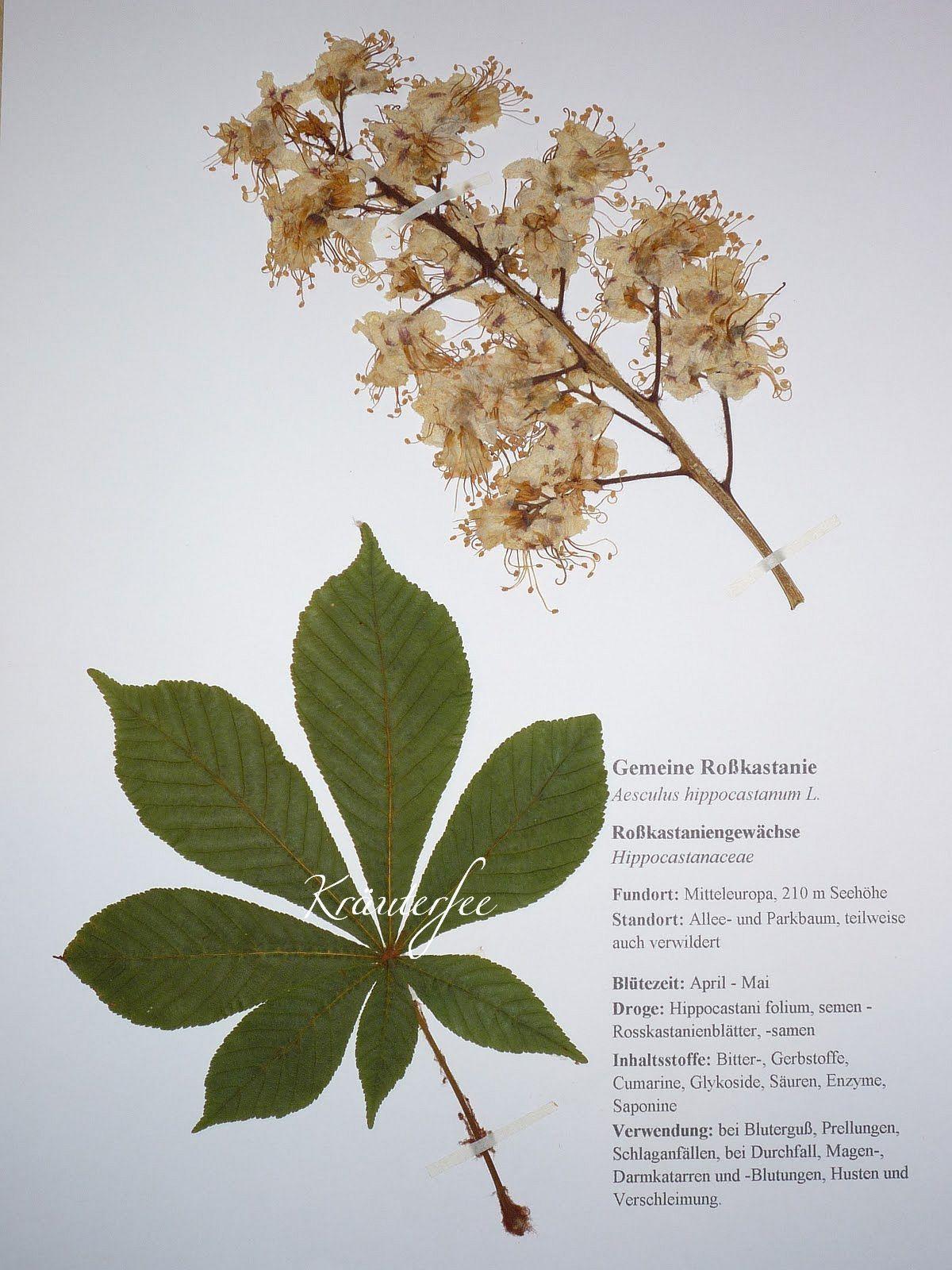 Herbarium Blätter blätter herbarium laubbäume nadelbäume aus 42 wählbar in