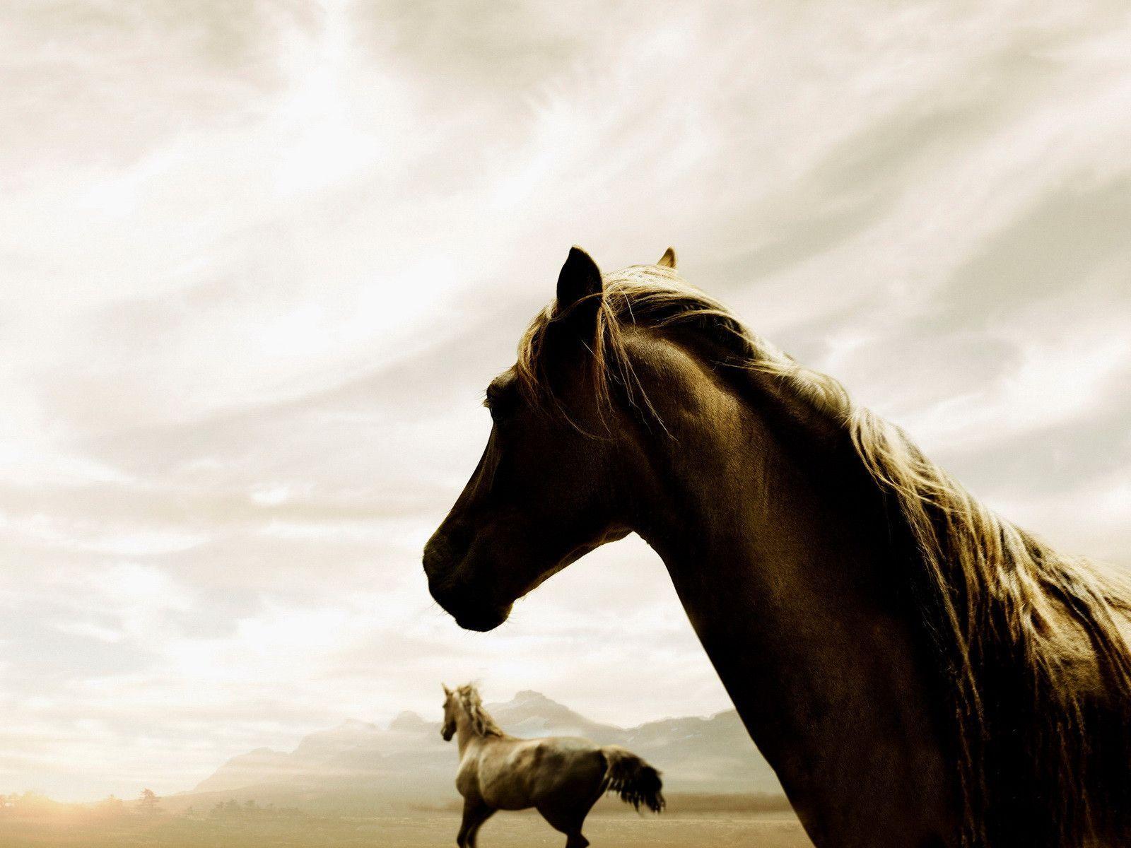 Desktop Wallpaper Gallery Windows 7 Horse Wallpaper For Horses Animals Beautiful Wild Horses