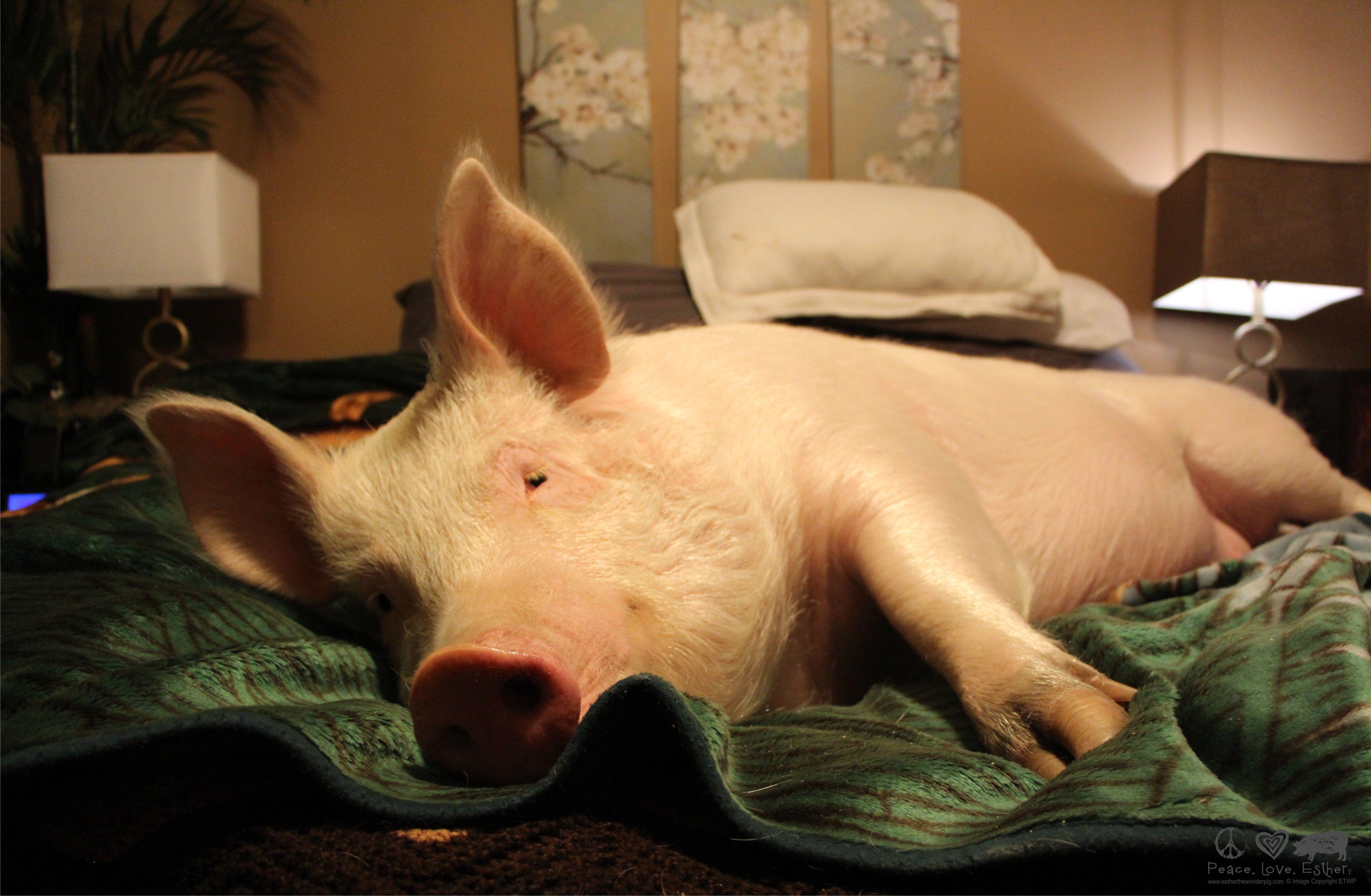 чем свинка проснулась фото вызывает боли, травмирует