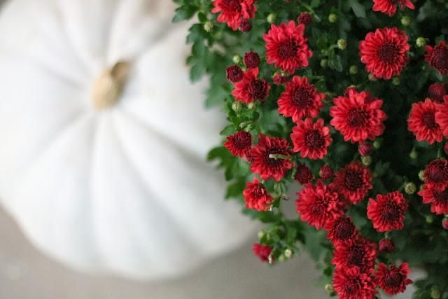 A classic looking fall refresh. / Red Mums + A White Pumpkin - an unexpectedly cute combo for your entry way or yard!