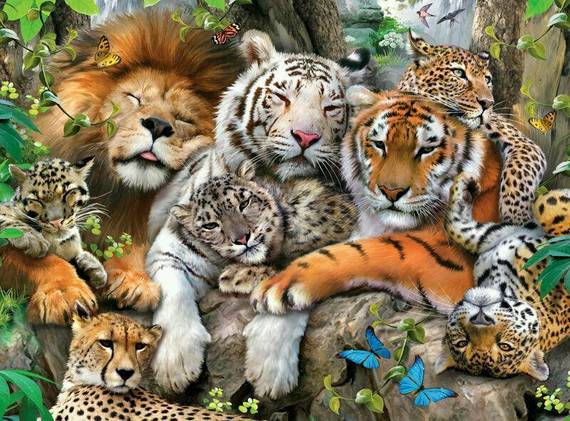 The family of big cats