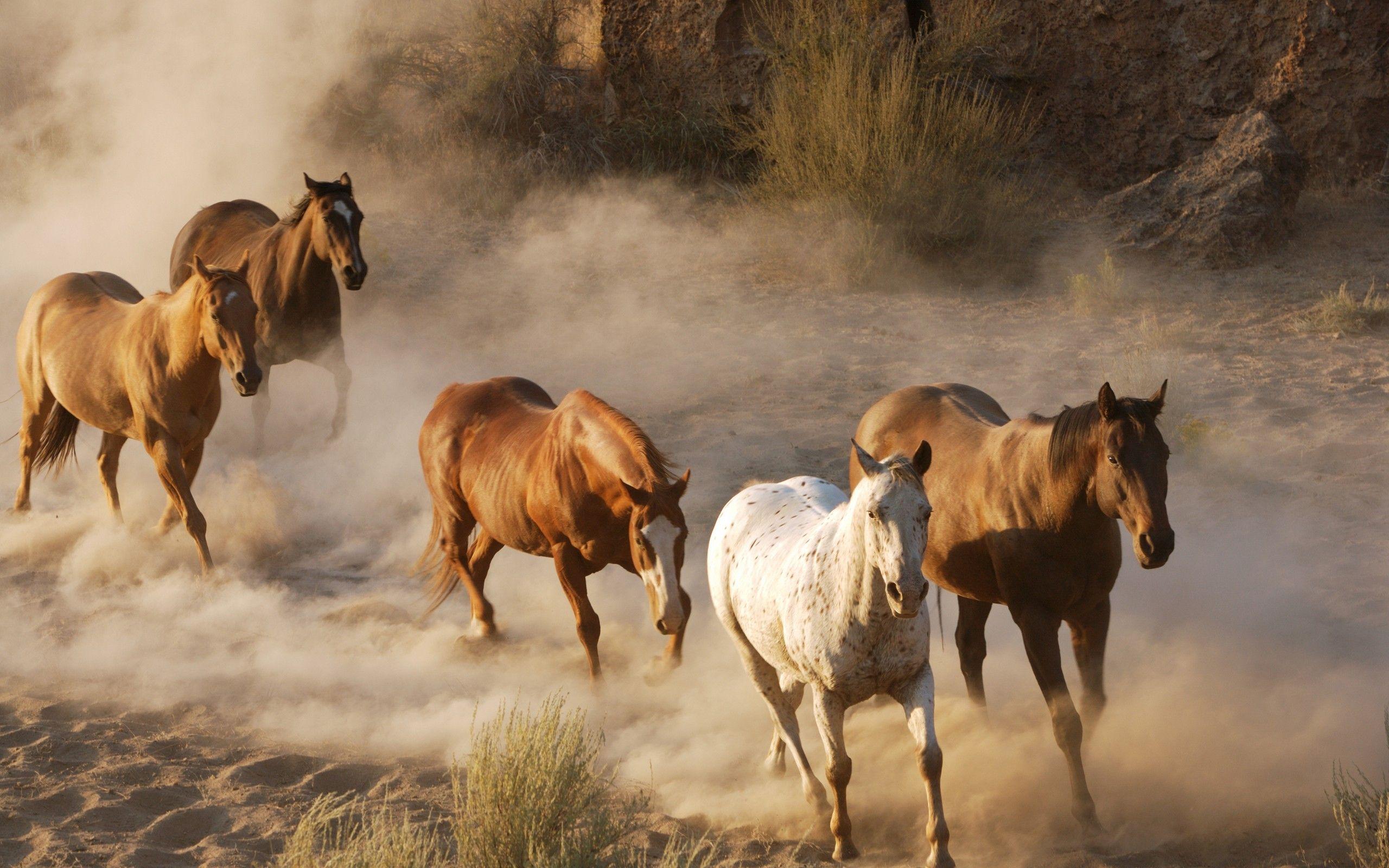 Wild Horses Running Free Free Download Running Horse Wallpaper