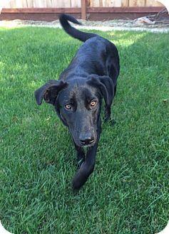 Fresno Ca Border Collie Mix Meet Sky A Dog For Adoption Http Www Adoptapet Com Pet 17012772 Fresno California Border Kitten Adoption Pets Pet Adoption