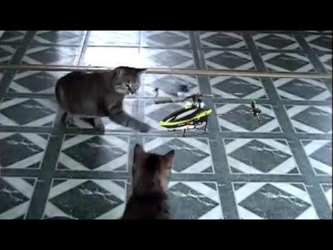Gatitos Chistosos Peleando Con Un Juguete Mascotas Graciosas Videos Chistosos De Gatos Otras Cosas Virales Animals Dogs Sale