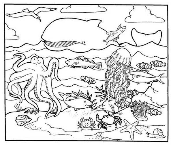 Animal Habitats Printables | Sea Animals, : A Healthy Sea Animals Marine  Habitats Coloring Page